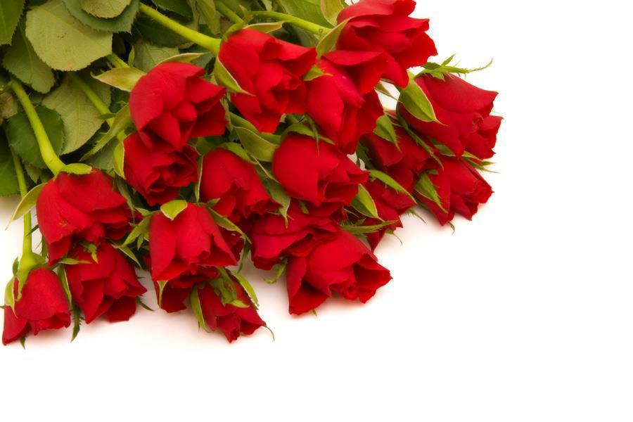fleurs rouges de la reunion. Black Bedroom Furniture Sets. Home Design Ideas