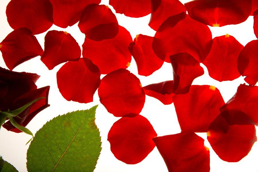 Des p tales de roses dans votre d co d co magazine - Petale de rose bain ...