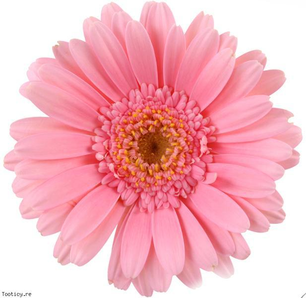 Des fleurs sur votre table de Pâques