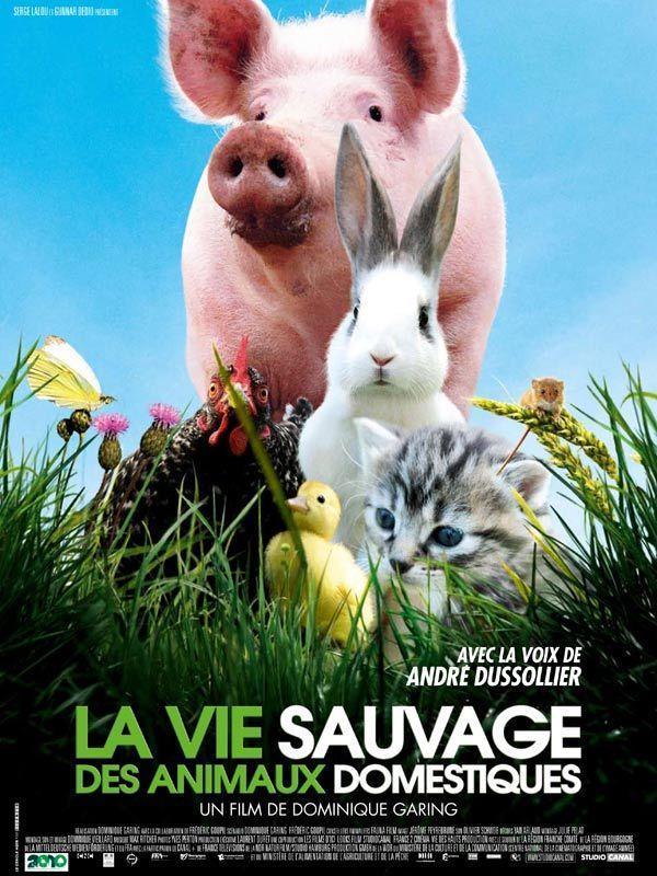 La vie sauvage des animaux domestiques - cinema reunion
