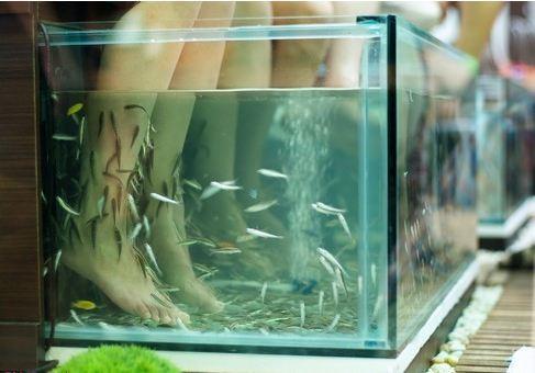 fish pedicure les poissons vous donnent de jolis pieds beaut 233 magazine 238 le de la r 233 union
